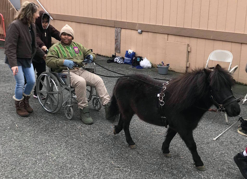 Top story 06e8276afa9debfb56c7 horse wheel chair