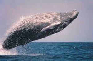 Whale Watching in Monmouth County: Now is the Time!