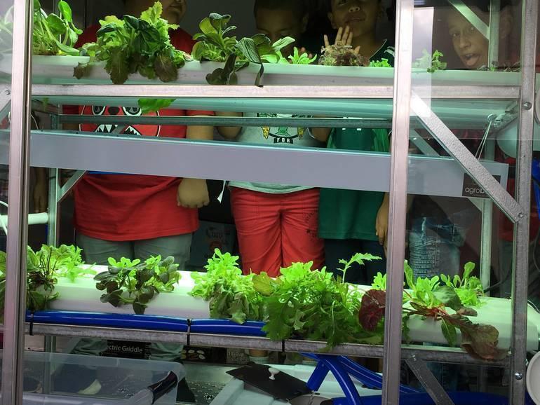 hydroponic garden on Wow.jpg