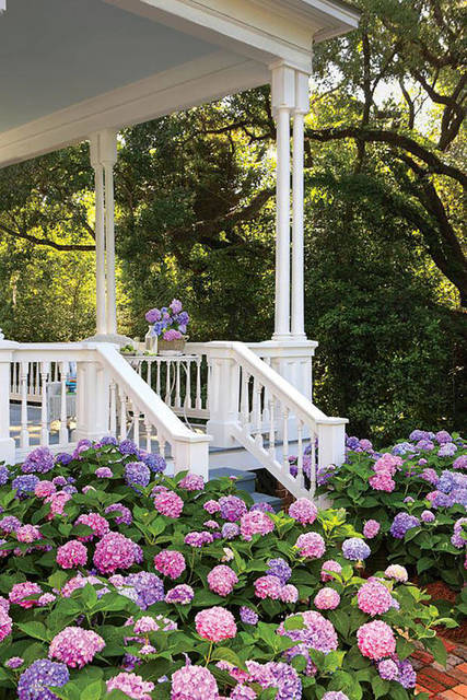 Top story 75f1395522d22ada6547 hyrangeas porch