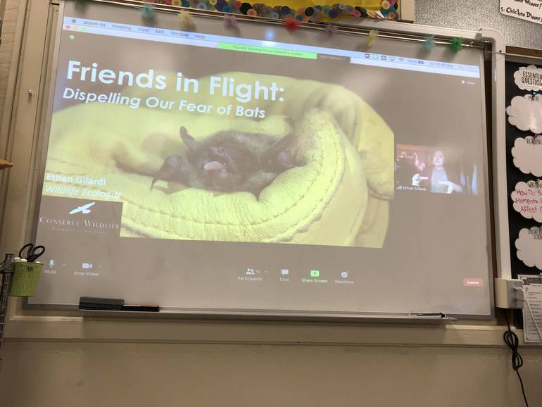 Valley Road Students Went Batty for New Jersey Wildlife