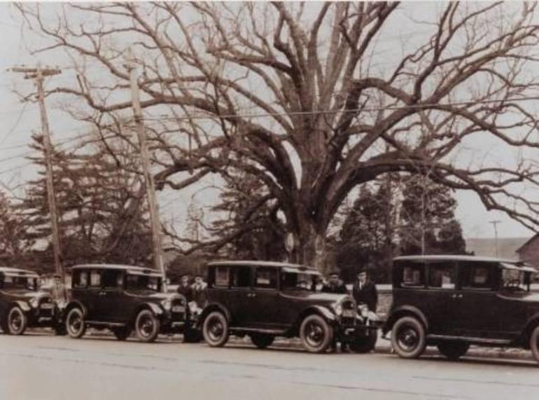 Salem Oak was 500 years old