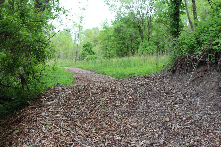 Overgrown Site in East Camden Becomes Expansive Nature Preserve