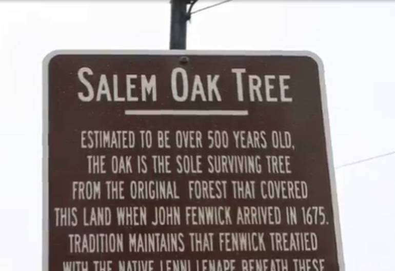 Department of Environmental Protection Gives Every Municipality in New Jersey a Seedling From Famous 500-Year-Old Salem Oak to Continue Legacy