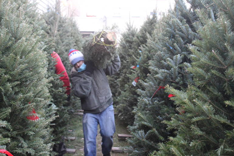 Start A New Tradition This Thanksgiving, Pick Out Your Christmas Tree Today in Nutley