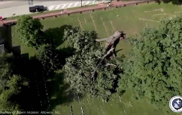 Salem Oak fell to the ground on June 6, 2019