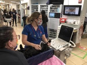 Dr. Sara Salomon treating a pet.