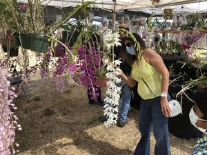 Fifth Annual Orchid & Plant Festival In Coral Springs