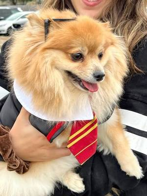 Glen Rock Has Happily 'Gone to the Dogs'...for Halloween Costume Advice, That Is