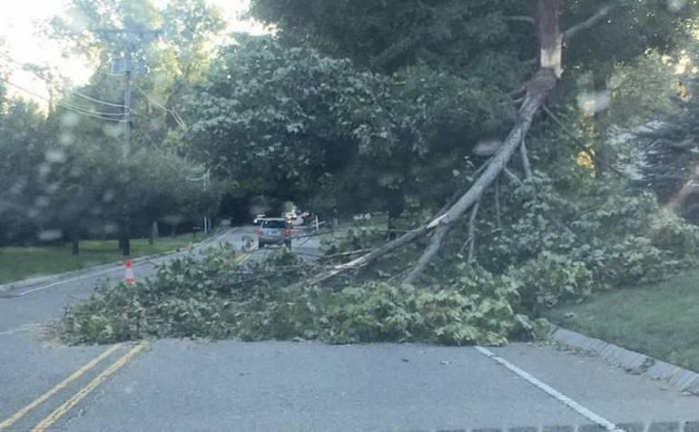 Cross Road nearly blocked by fallen tree
