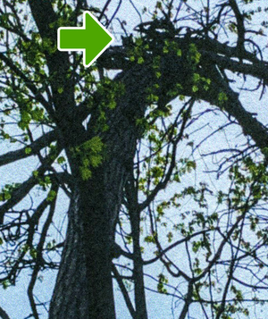 Carousel image 40bcf88d549569368199 izzy up tree arrow