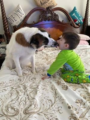 Boulevard Veterinary Clinic Pet of the Week: Jax