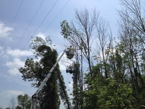Carousel image 91de81fe57de081e87d2 jcp l vegetation management work underway
