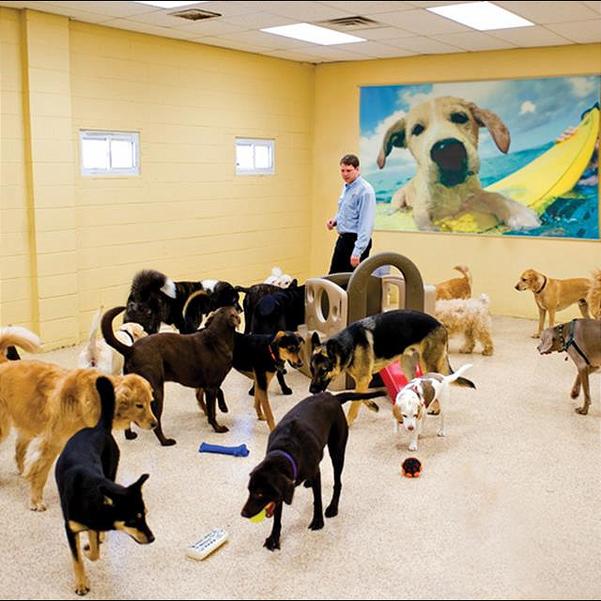 k9Doggie Daycare dogs.png