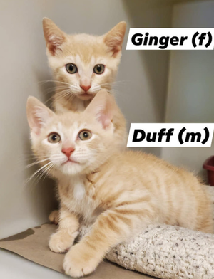Parsippany Animal Control and Shelter Has Kittens Available for Adoption