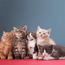 Carousel_image_d065ebbd89c27f428c77_kittens