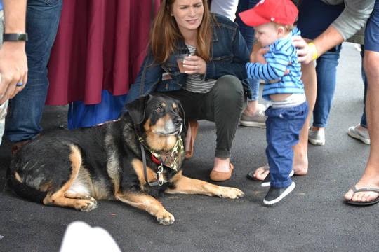 Top_story_582973300e1dccf65695_kids_and_dogs
