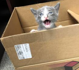 Boulevard Veterinary Clinic Pet of the Week: Loki