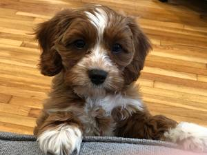 Boulevard Veterinary Clinic Pet of the Week: Leo