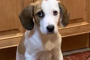 Boulevard Veterinary Clinic Pet of the Week: Levi