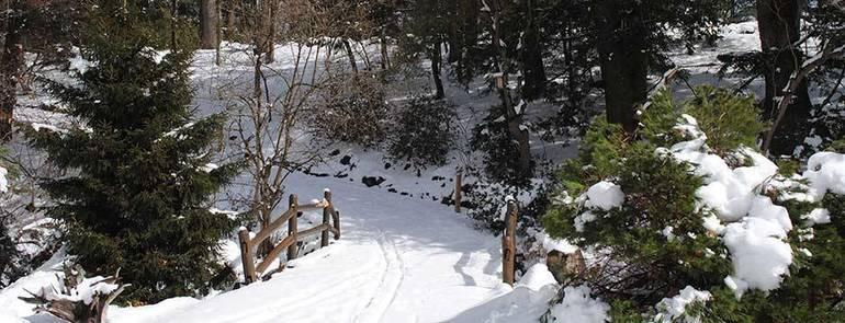 Laurelwood Snow.jpg