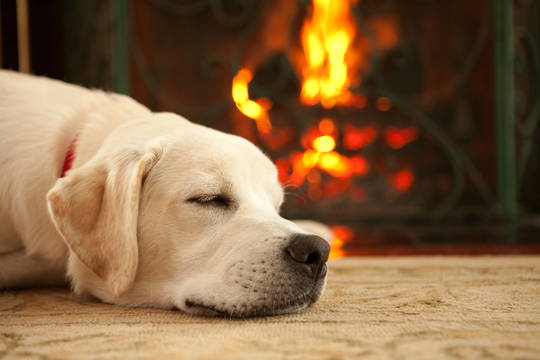 Top story 3d23f7883075e5590123 lab puppy sleeping in front of fireplace november 2018 sparta living