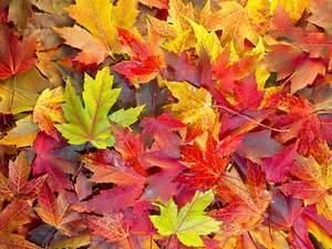 Carousel image 48fef035faa460d1fac1 leaves