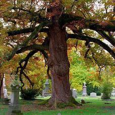 Carousel image 5f540a7e5575fcdc6a94 life tree500