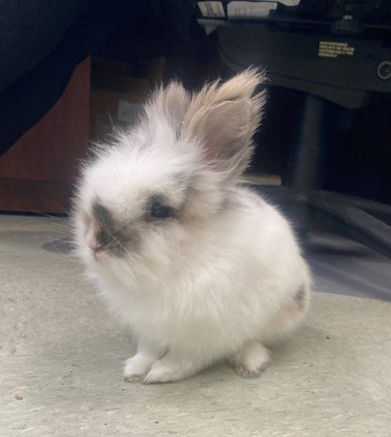 Lost and found bunny 1.jpg