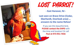 Carousel image 3ca1289464556ae4339d lost parrot