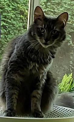 Carousel_image_cfcc183f603089c187ba_lost_cat_crop