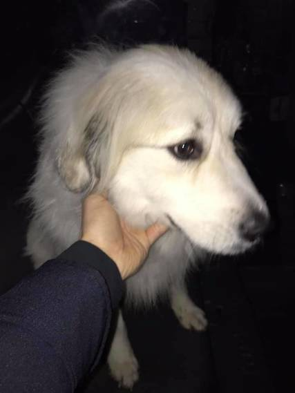 Top story 700a0a8be2037601a3f4 lost dog 1