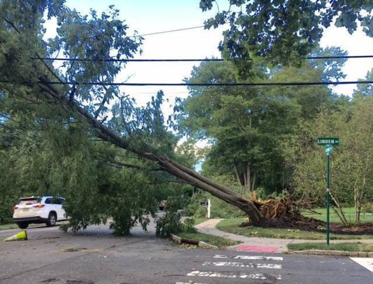 Large tree on wires on Lyons Road