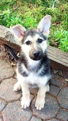 Boulevard Veterinary Clinic Pet of the Week: Molly