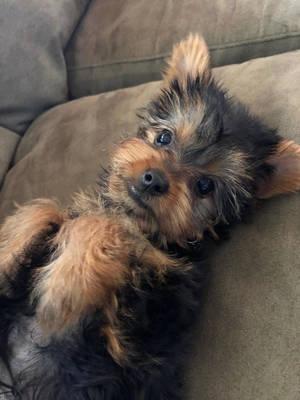 Boulevard Veterinary Clinic Pet of the Week: Milo