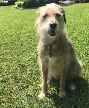 Boulevard Veterinary Clinic Pet of the Week: Mona