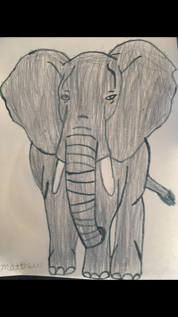 Matt elephant 4-19.png