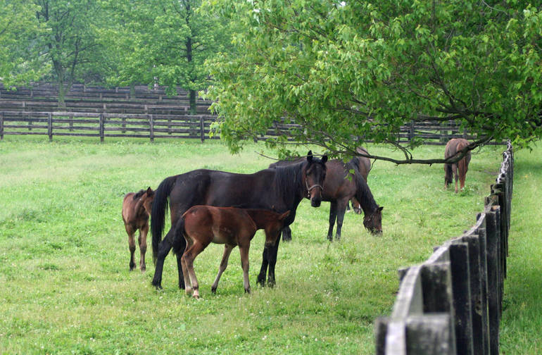 mares and foals.JPG