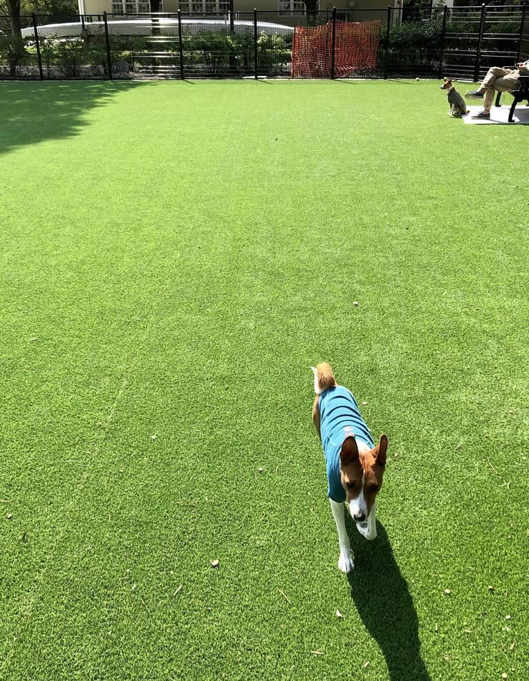 Maxwell dog run 1.jpg