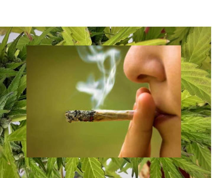 Best crop cac0eb8acdecdb3d087e marijuanacollage