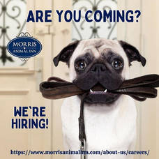 Now Hiring: Morris Animal Inn
