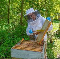 Carousel image 7684cbf8a68fdd003e24 mary emgold beekeepers3 pulling honey