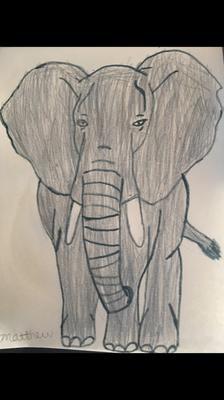 Carousel image b190699e6e45f80038e9 matt elephant 4 19