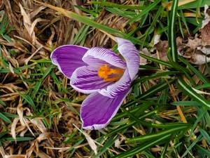 Picture of the Day: Signs of Spring in Barnegat Bring a Heavenly Message