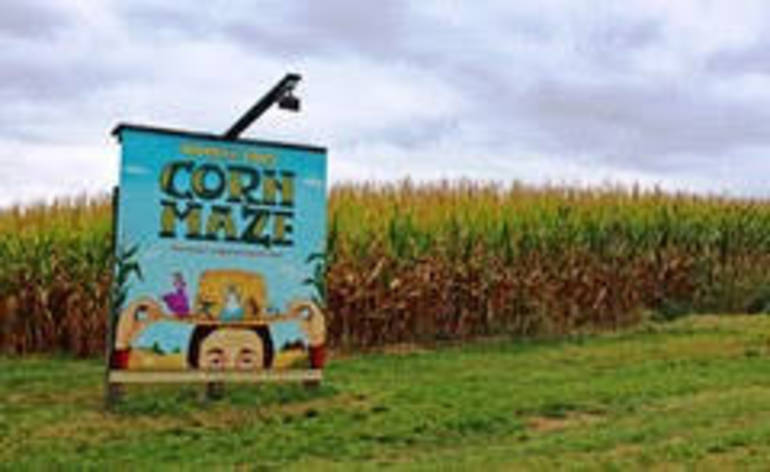 Mercer Corn Maze.jpg
