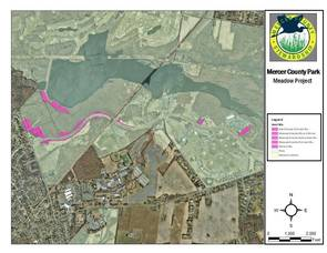 Mercer County Park Wildflower Meadow Transformation Underway