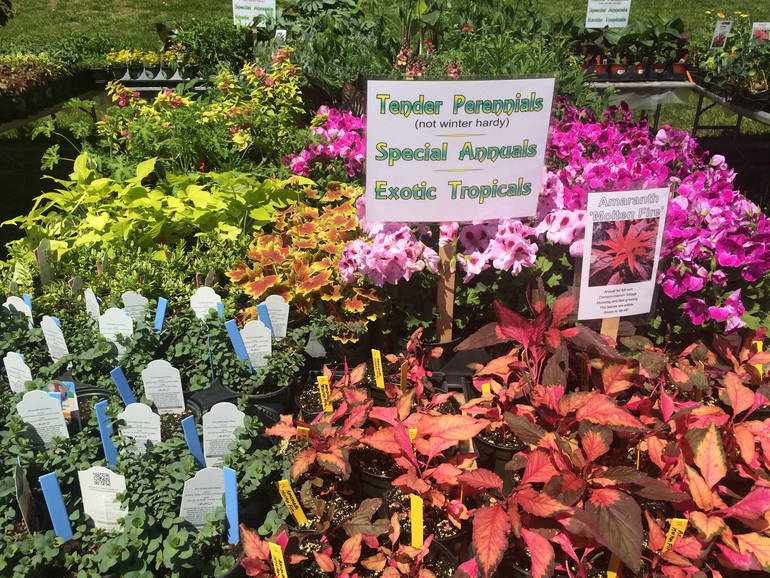 Maplewood Garden Club's Plant Sale Is ON!