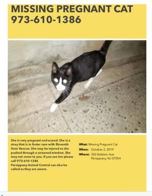 Carousel image bbb25e4100678854aec7 missing cat