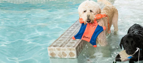 Swimming Lessons for Your Furry Best Friend? Excellent Exercise for
