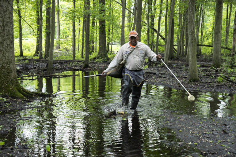 Mosquito Morris County Mosquito Control inspector Walter Jones inspects for mosquito larvae at a wetland in Lincoln Park Karen Mancinelli.jpg